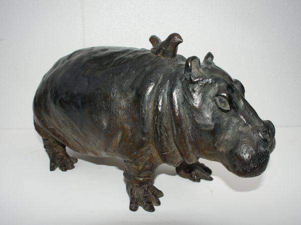 A dos d'hippo